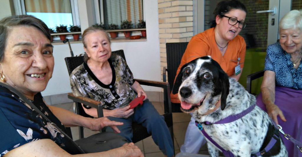 Beneficios perros a personas ancianas
